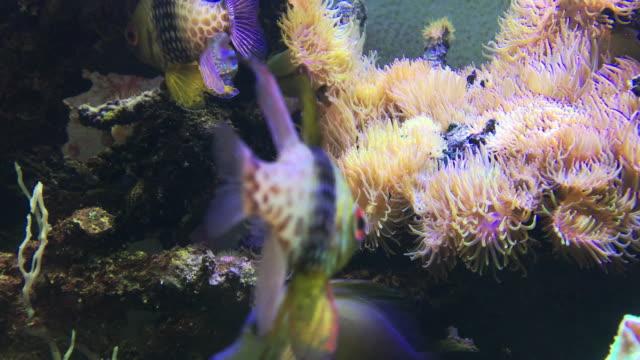 sea life in aquarium - aquarium stock videos and b-roll footage