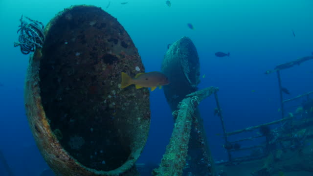sea life living in artificial reef boga shipwreck (4k) - pipe stock videos & royalty-free footage