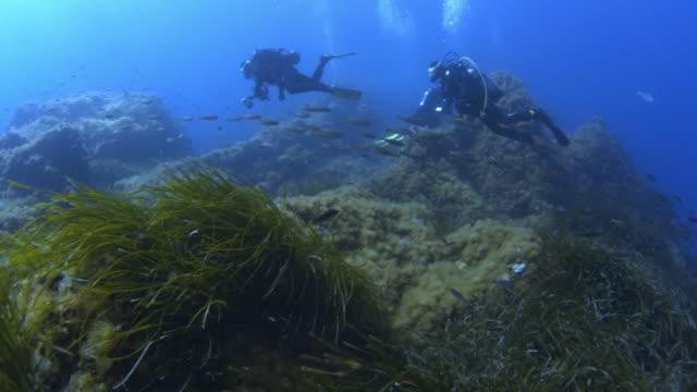 vídeos y material grabado en eventos de stock de sea life of mediterranean sea - the nature conservancy