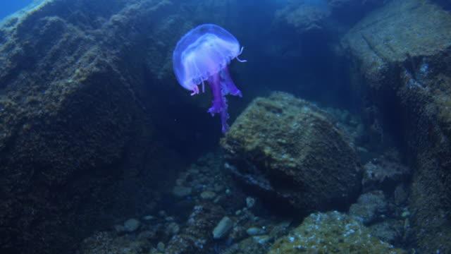 vidéos et rushes de sea life of mediterranean sea - vincent pommeyrol
