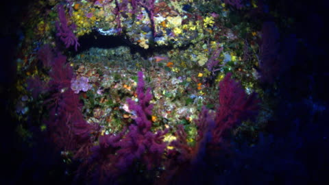 vídeos de stock e filmes b-roll de sea life of mediterranean sea - coral macio