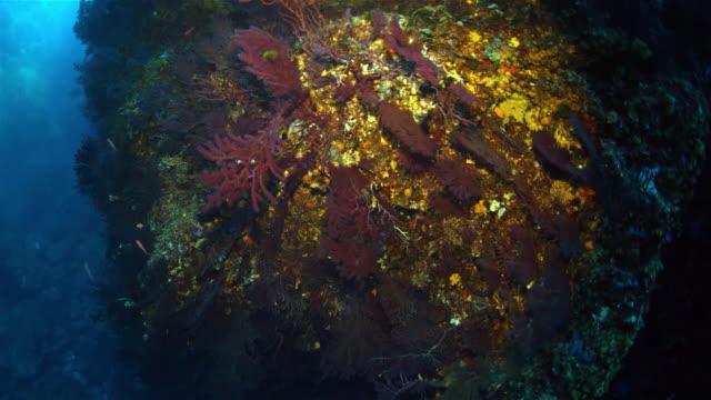 sea life of mediterranean sea - ゴーゴニアンコーラル点の映像素材/bロール