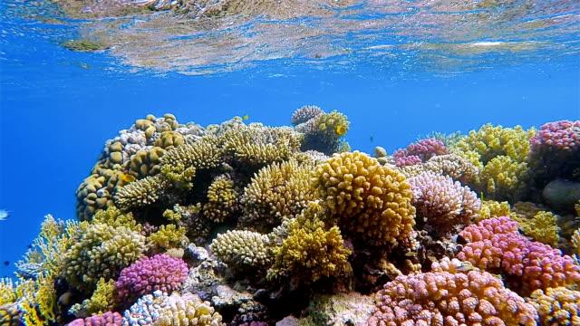 Sea life on beautiful coral reef on Red Sea nearby Marsa Alam