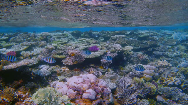 sea life on beautiful coral reef with lot of small tropical fish on red sea - marsa alam - egypt - red sea stock videos & royalty-free footage