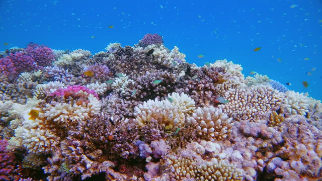 sea life on beautiful coral reef with lot of tropical fish / baby reef on red sea - lahami bay - marsa alam - egypt - red sea stock videos & royalty-free footage