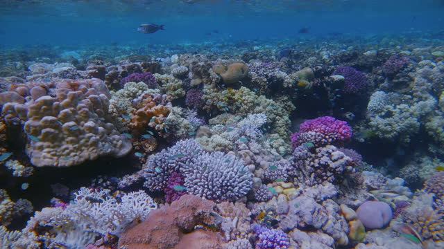 sea life on beautiful coral reef with lot of tropical fish / baby reef on red sea - lahami bay - marsa alam - egypt - coral cnidarian stock videos & royalty-free footage