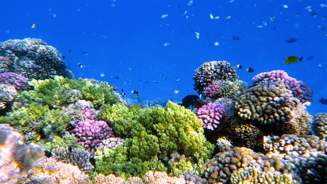 sea life on beautiful coral reef with lot of tropical fish in red sea - marsa alam - egypt - reef stock videos & royalty-free footage