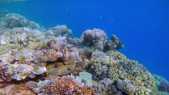 sea life on beautiful coral reef with lot of tropical fish on red sea - lahami bay - marsa alam - egypt - red sea stock videos & royalty-free footage