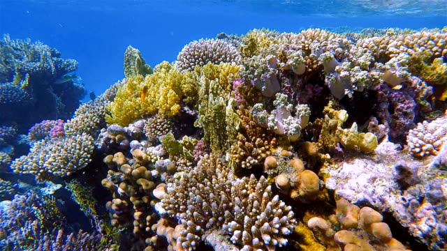 Sea life on beautiful coral reef with lot of tropical Fish on Red Sea nearby Marsa Alam