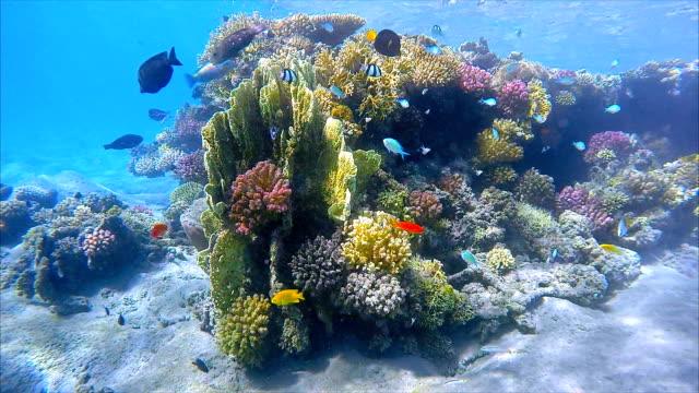sea life on coral reef with different fish specieson - red sea - corallo molle corallo video stock e b–roll