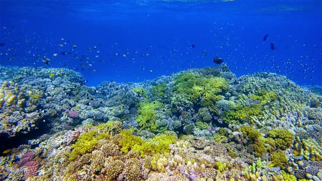 Sea life on coral reef with lot of tropical Fish on Red Sea nearby Marsa Alam