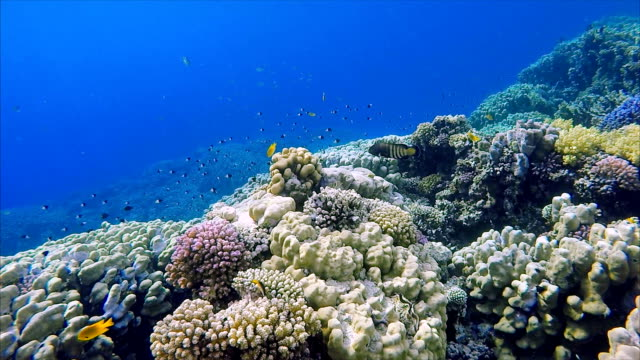 Sea life on coral reef with lot of tropical Fish / Red Sea