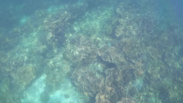 Sea life on coral reef with lot of tropical Fish