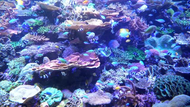 sea life under backlight