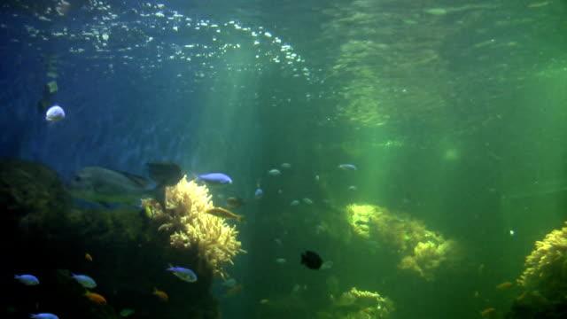 vídeos y material grabado en eventos de stock de vida marítima - cnidario