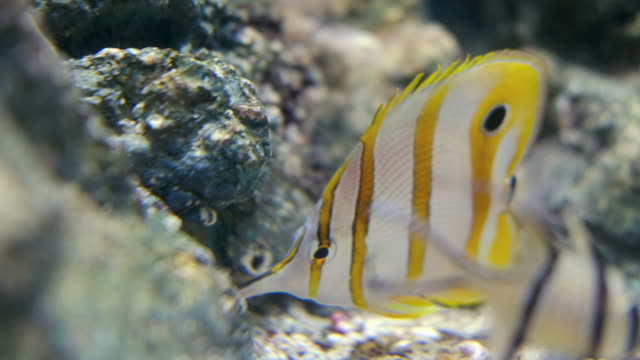 sea life - reef stock videos and b-roll footage