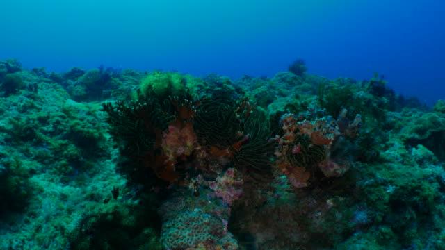 Sea lily colony in undersea pinnacle