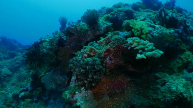 Sea lily, finger coral, undersea reef