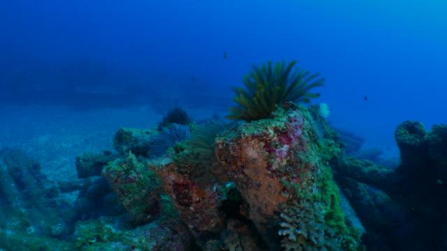 Sea lily on artificial reef undersea