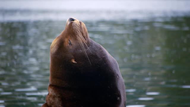 Sea Lion along Oregon Coast