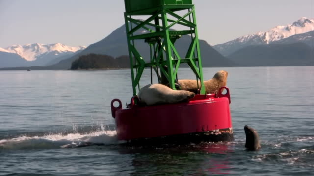 stockvideo's en b-roll-footage met sea lion in high definition hd & saved at highest quality. - zeeleeuw
