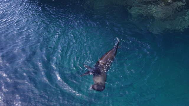 stockvideo's en b-roll-footage met sea lion in the galapagos - galapagoseilanden