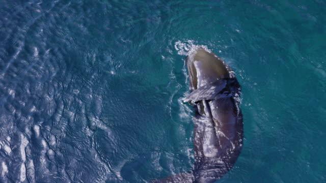 sea lion in the galapagos - galapagosöarna bildbanksvideor och videomaterial från bakom kulisserna