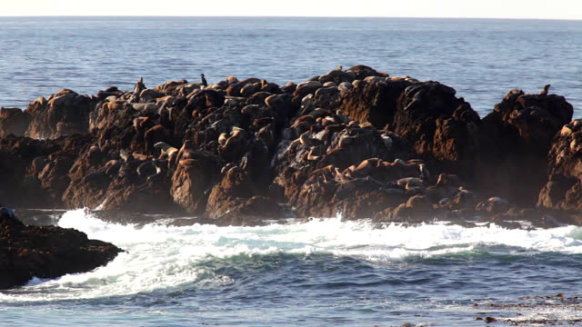 sea lions bask on rocks - アシカ点の映像素材/bロール