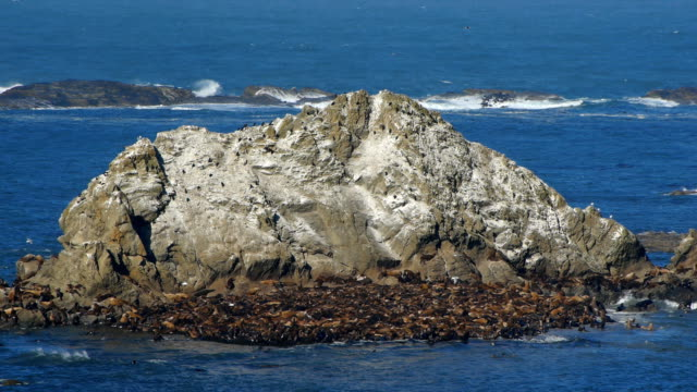 stockvideo's en b-roll-footage met hd sea lions on rock along coast - oregon coast