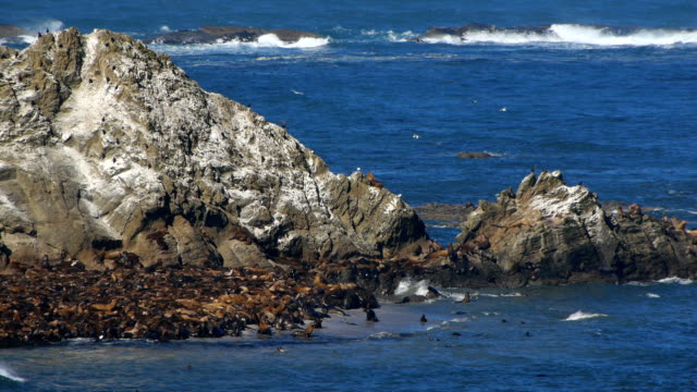 stockvideo's en b-roll-footage met hd sea lions on rock - oregon coast