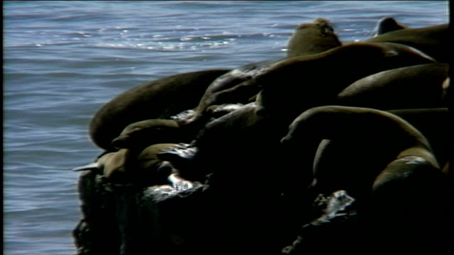 sea lions sitting on a large rock in santa cruz, california - アシカ点の映像素材/bロール