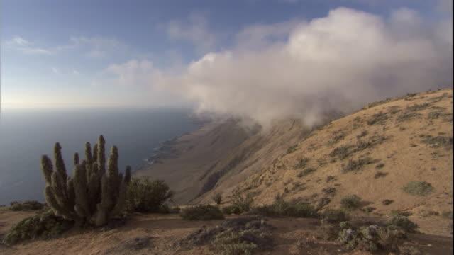 sea mist drifts in over atacama desert, chile. avaiable in hd. - kaktus stock-videos und b-roll-filmmaterial