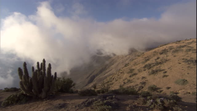 sea mist drifts in over atacama desert, chile. avaiable in hd. - succulent stock videos & royalty-free footage