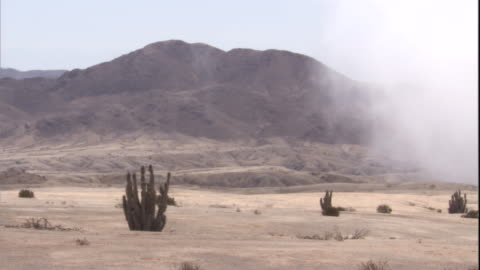 sea mist drifts in over atacama desert, chile - succulent stock videos & royalty-free footage