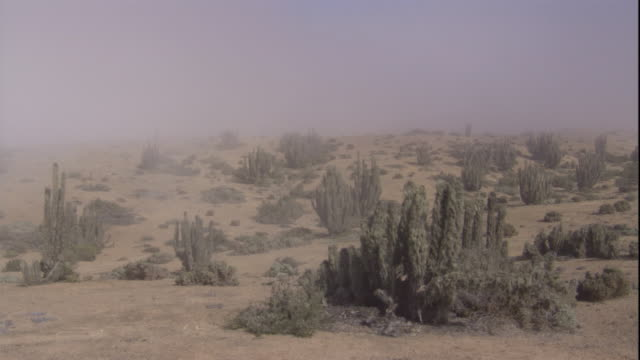 sea mist drifts in over the atacama desert, chile. available in hd. - cactus stock videos & royalty-free footage