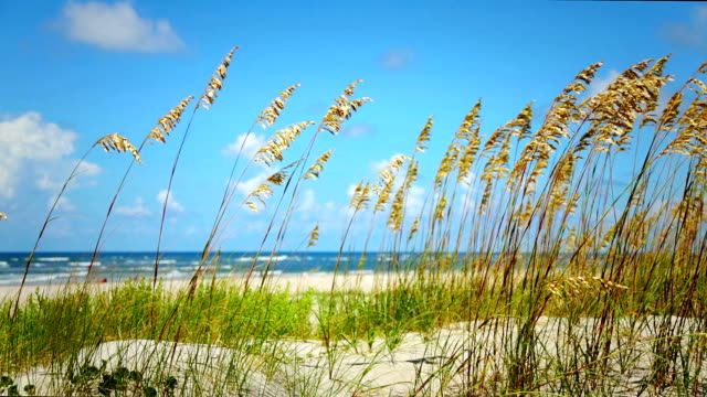 sea oats on the atlantic - north carolina beach stock videos & royalty-free footage