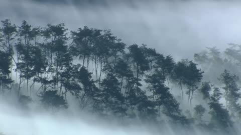 ms zo sea of cloud scene at mountain peak / imsil, jeollabukdo, south korea - 1 minute or greater stock videos & royalty-free footage