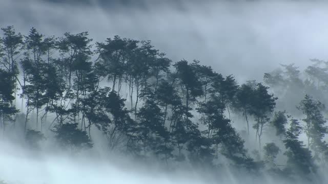 vídeos de stock e filmes b-roll de ms zo sea of cloud scene at mountain peak / imsil, jeollabukdo, south korea - 50 segundos ou mais