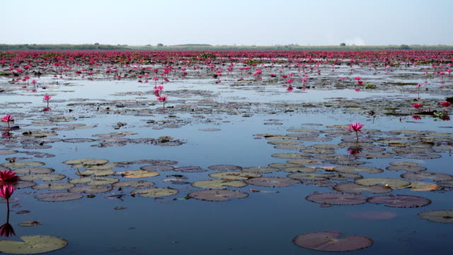 sea of red lotus lake, Thailand