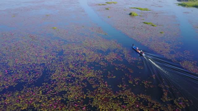 Meer von roten Lotus See, Thailand