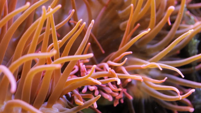 sea plant - sea anemone stock videos and b-roll footage