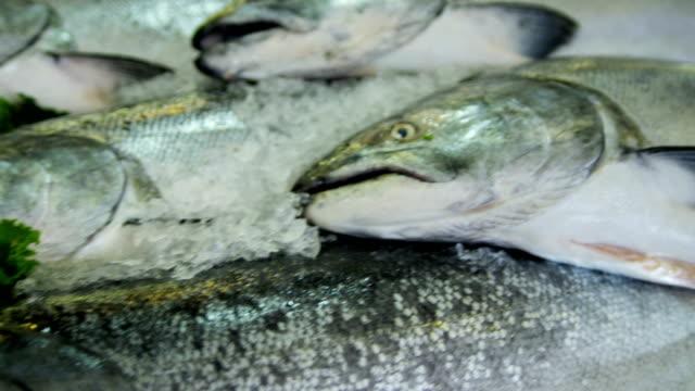 vídeos de stock, filmes e b-roll de sea salmon pikes fish market downtown seattle usa - pike place market