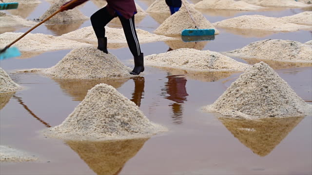 sea salt harvesting - salt shaker stock videos and b-roll footage