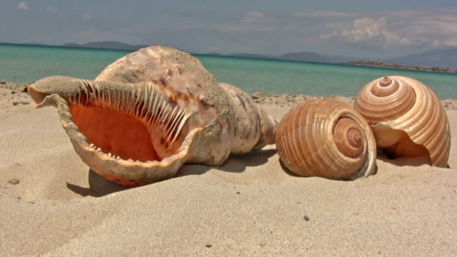 sea shell - seashell stock videos & royalty-free footage