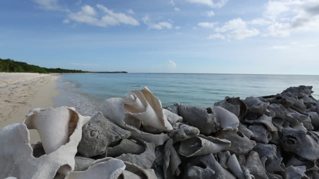 sea shells and snails layed out on pier overlooking palancar beach, cozumel. - animal shell stock videos & royalty-free footage