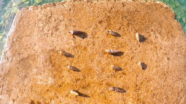 Sea snails in the 442 formation