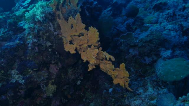 vídeos de stock e filmes b-roll de mar esponja vida no recife de coral (4k - coral macio