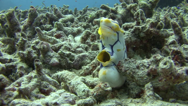 sea squirt - sea squirt stock videos & royalty-free footage