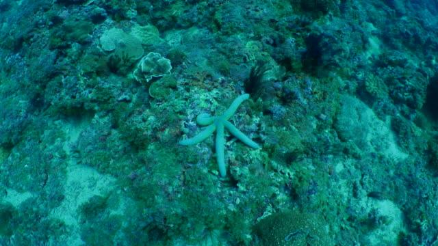 vídeos de stock, filmes e b-roll de estrela do mar no submarino recifes de corais - estrela do mar