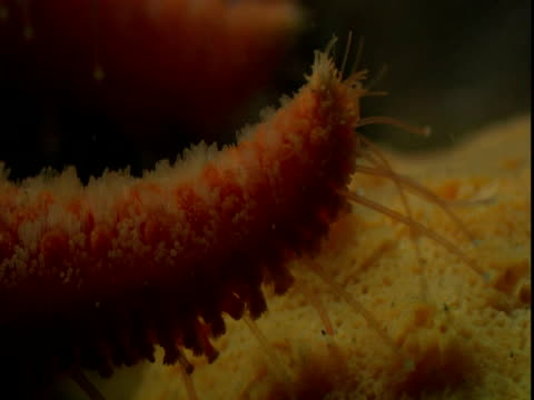 a sea star investigates a porous surface on the ocean floor. - porous stock videos & royalty-free footage